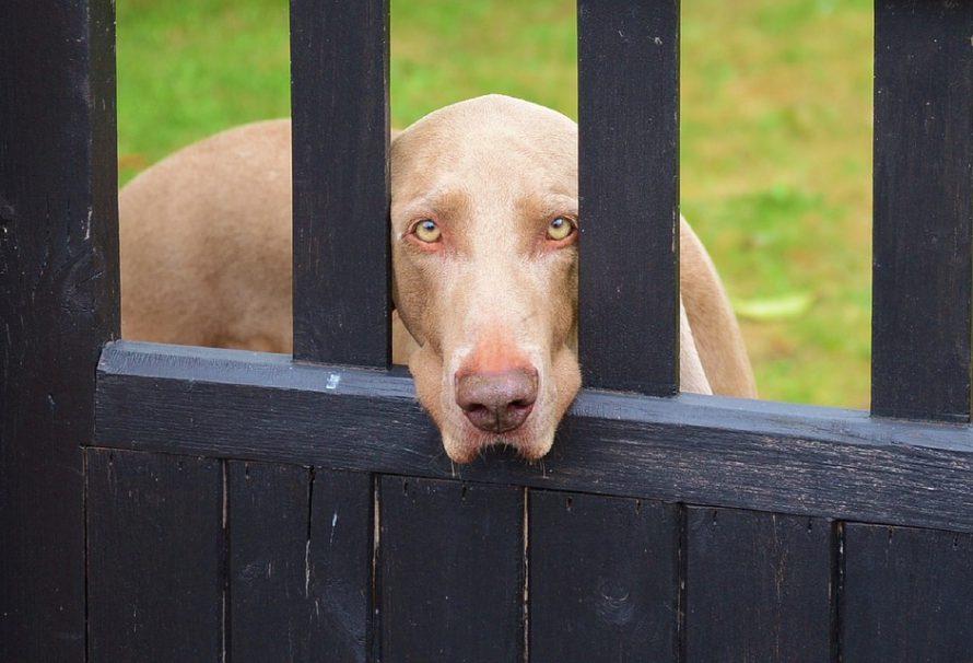 4 druhy pamlsků, které si váš pes zamiluje!
