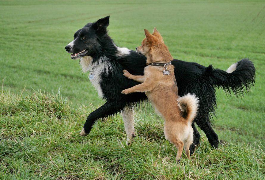 Jak správně pečovat o klouby psů?