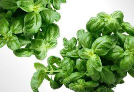 Jak správně pěstovat bylinky