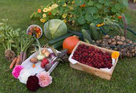 Podzimní zahrada nabízí bohatou úrodu. Tipy, jak ji zpracovat na zimu
