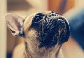 5 důvodů, proč chránit domácí mazlíčky proti parazitům