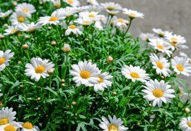 Moderní zimní zahrady vám poskytnou pohodlí po celý rok
