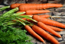 Sušení letní a podzimní úrody je hračka. Rady pro začátečníky