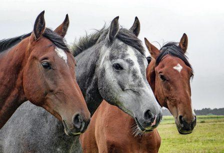 Uvažujete o novém koníčku? Začněte jezdit na koni!