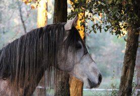Už jste vyzkoušeli jízdu na koni?