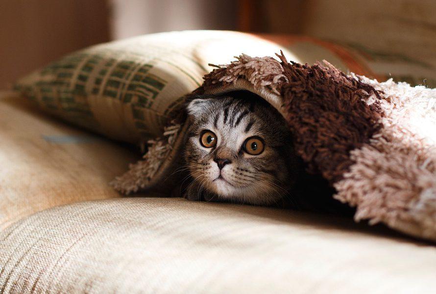 Škrabadla pro kočky vybírejte uvážlivě