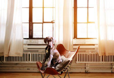 Pes sám doma – jaký je nejlepší postup?