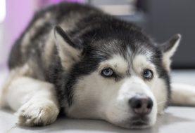 Dopřejte svému psovi kvalitu z Itálie
