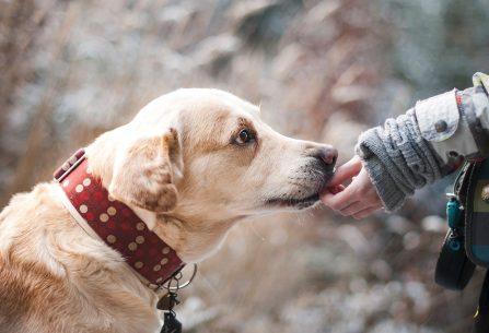 Kvalitní krmivo je nezbytné pro skvělou kondici vašeho psa