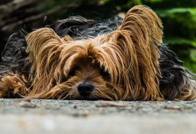 V horkém počasí potřebujeme ochladit nejen my, ale i naši psí mazlíčci