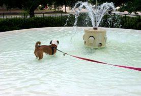 Se psem na dovolenou? Žádný problém